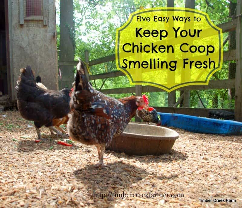 Keep Your Chicken Coop Smelling Fresh