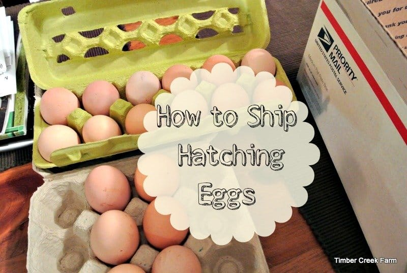 Shipping Hatching Eggs (For the First Time)