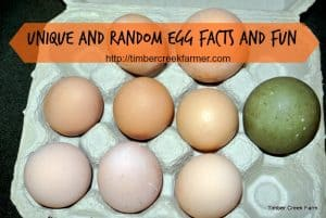 Unique and Random Egg Facts from Timber Creek Farm