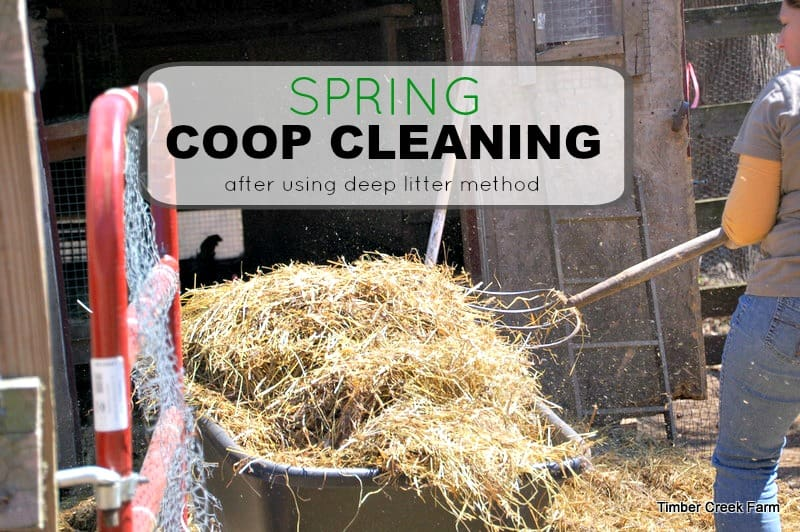 Spring Coop Cleaning with Deep Litter