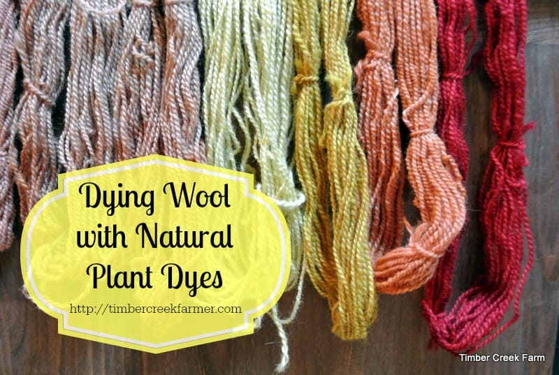 Dyeing Wool with Natural Plant Dyes