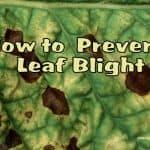 5 Tips to Prevent Leaf Blight