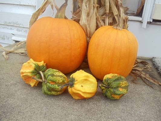 Grow Your Own Fall Display