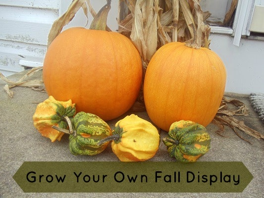 Grow Your Own Fall Display – Start Today!