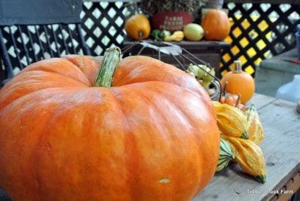 Use the whole pumpkin timbercreekfarmer.com