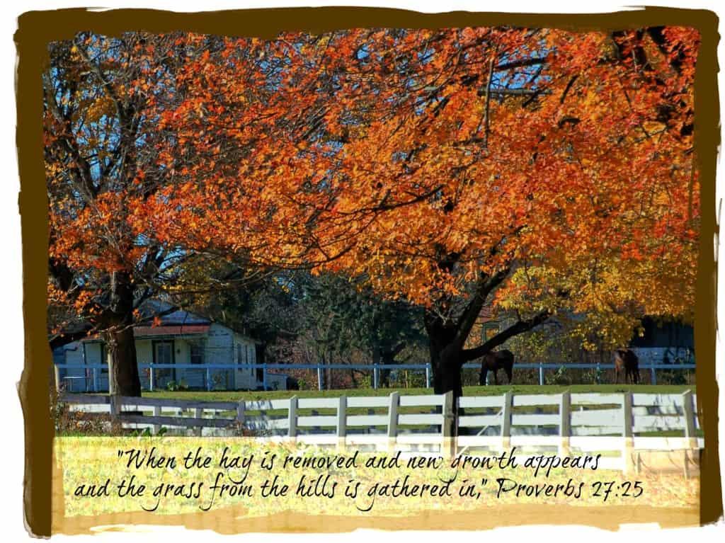 Sunday Thoughts Proverbs 27  timbercreekfarmer.com