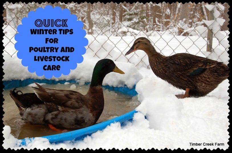 Quick Winter Tips  http://timbercreekfarmer.com