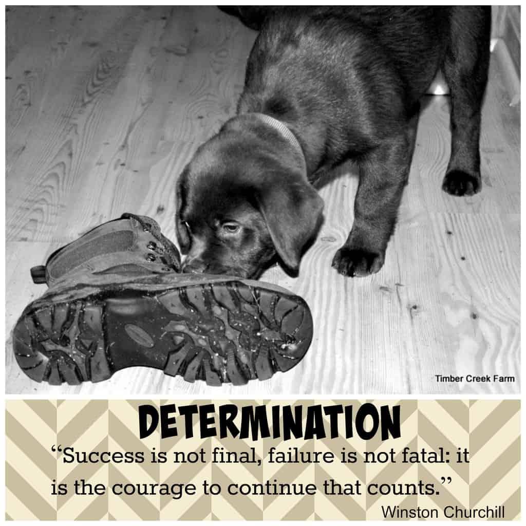 Homestead Determination