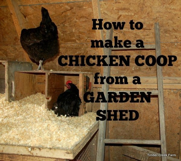 Make a Chicken Coop from a Garden Shed - Timber Creek Farm