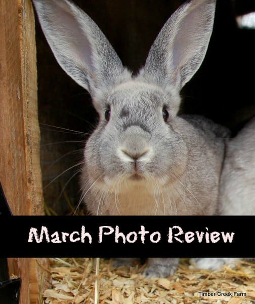 March Photo Review