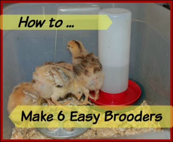 6 easy brooder ideas