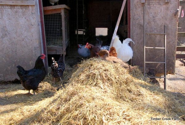 managing and composting chicken manure