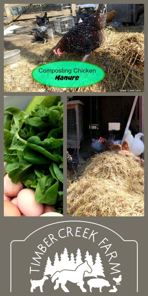 chicken manure janet writes about many homestead and livestock related topics on her blog timber creek farm her new book chickens from scratch - Chicken Manure