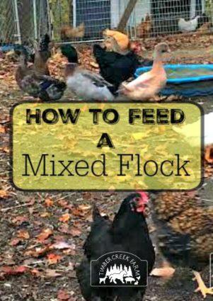 feed a mixed flock