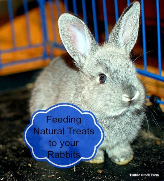 Bunny Treats for Your Pet Rabbits