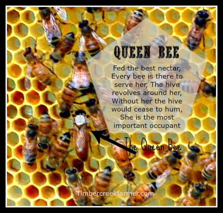 Queen Bee and Our New Hive