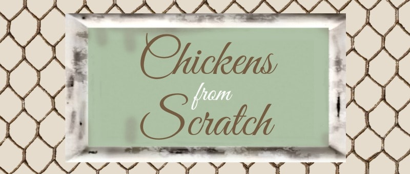 chickens from Scratch header