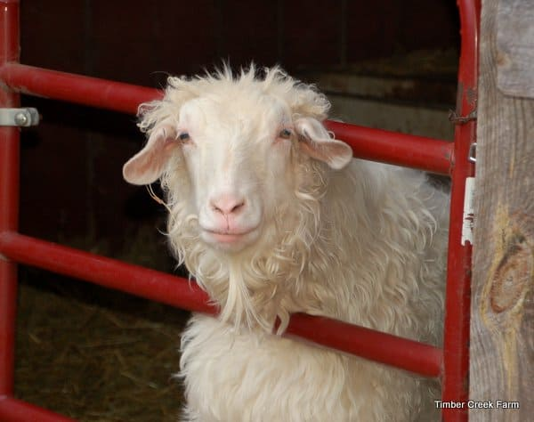 9 truths about goats
