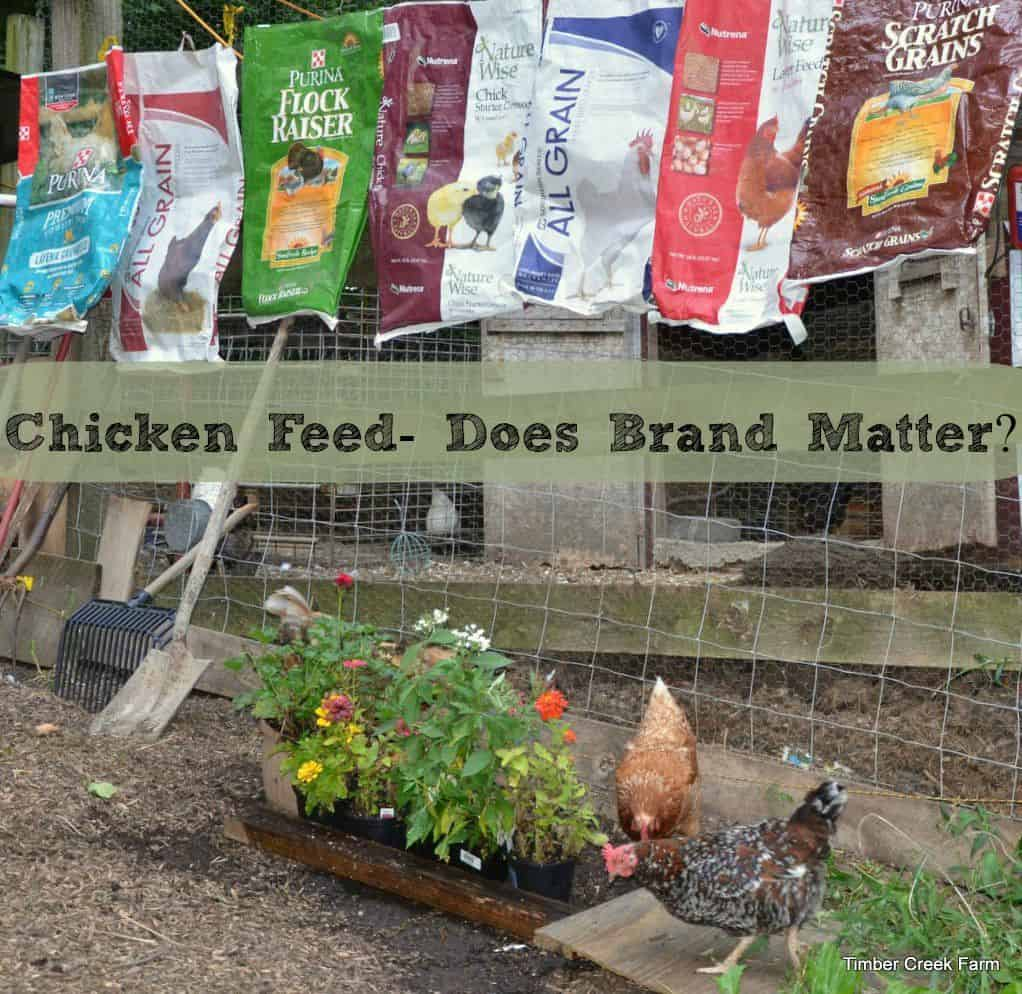 Chicken Feed Brand – Does it Matter?