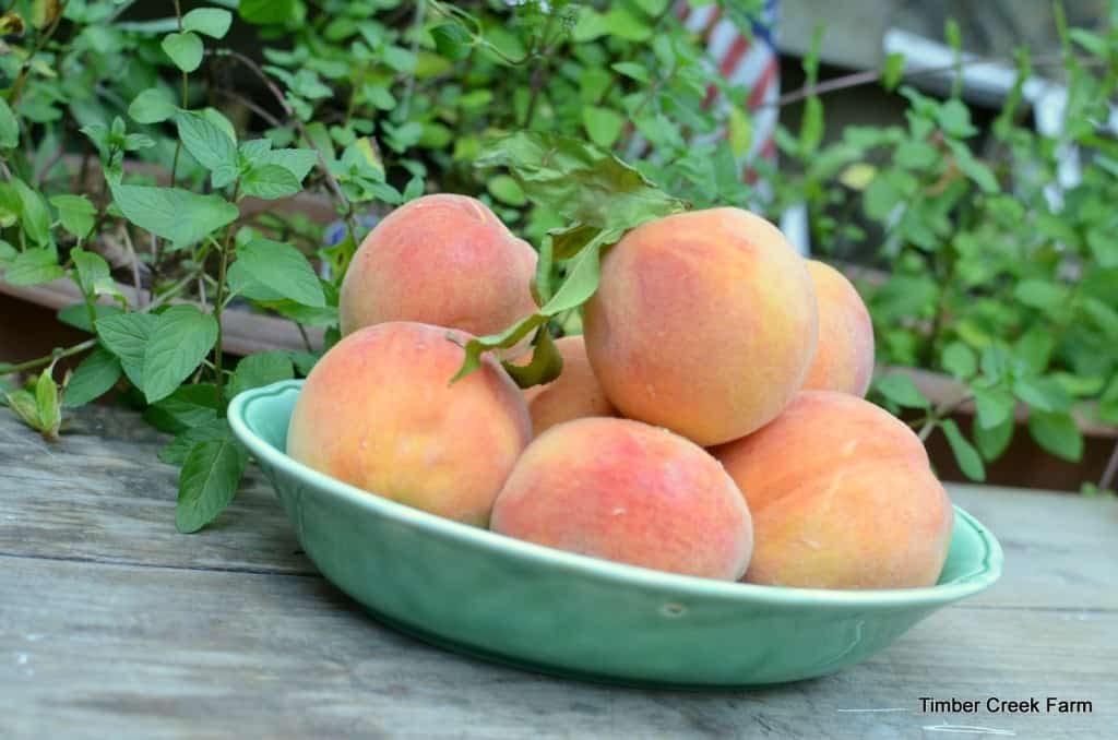 peaches preserved baked delicous