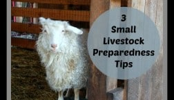 small livestock preparedness