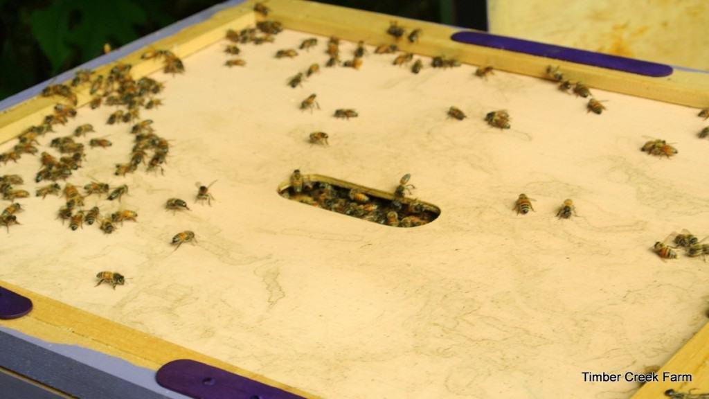 honeybee fall care