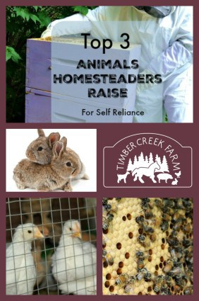 Animals homesteaders raise2