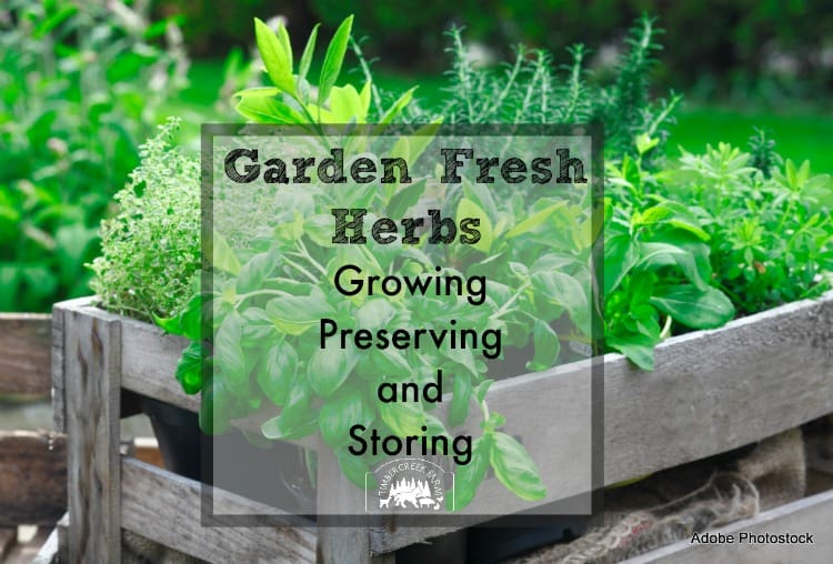 Growing, Preserving and Storing Garden Fresh Herbs