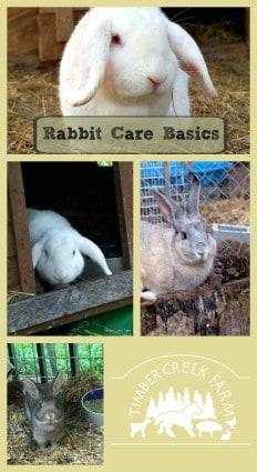 rabbit care basics