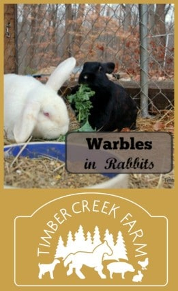 warbles in rabbits