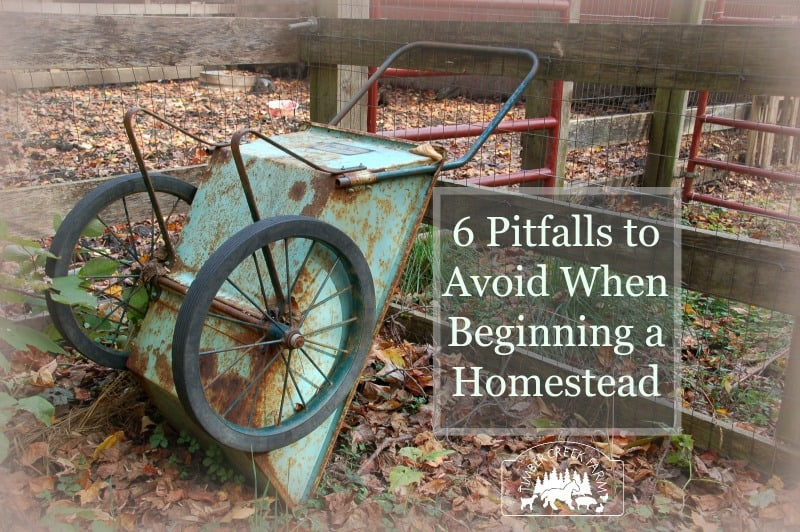 pitfalls in a homesteading life