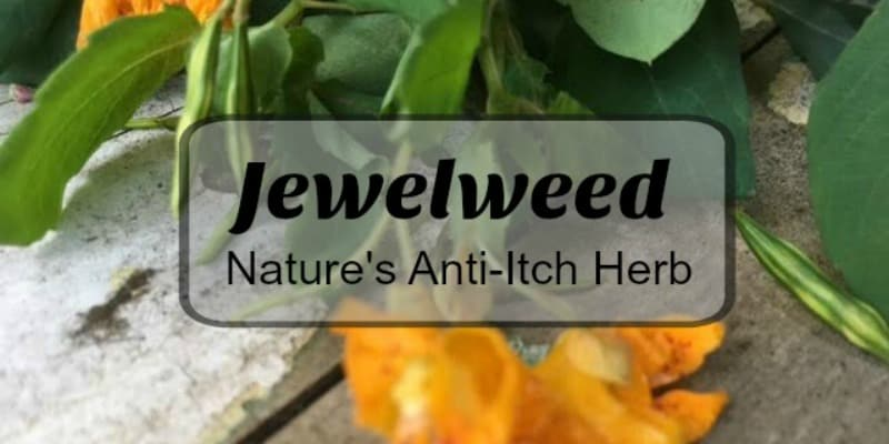 Jewelweed Anti Itch Relief from the Woods