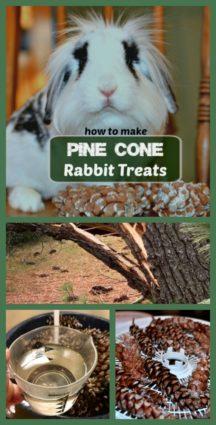 pine cone rabbit treats