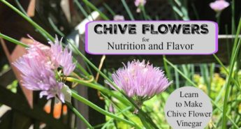 Chive Flowers Add a Nutritional Boost and Flavor