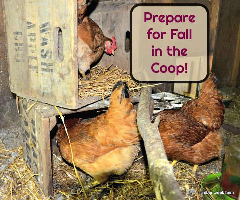 6 Fall Chicken Coop Preparations to Make Now