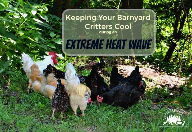 extreme heat wave