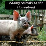 Adding Animals to the Homestead