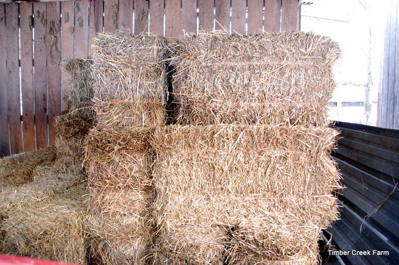Hay, Types of Forage, Feeding and Storage - Timber Creek Farm