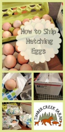 shipping hatching eggs