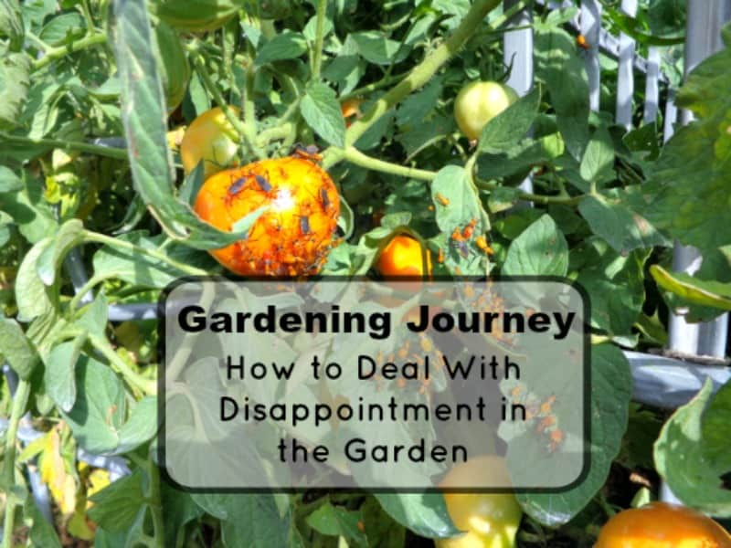 Gardening Journey- How to look at disappointment in your garden.