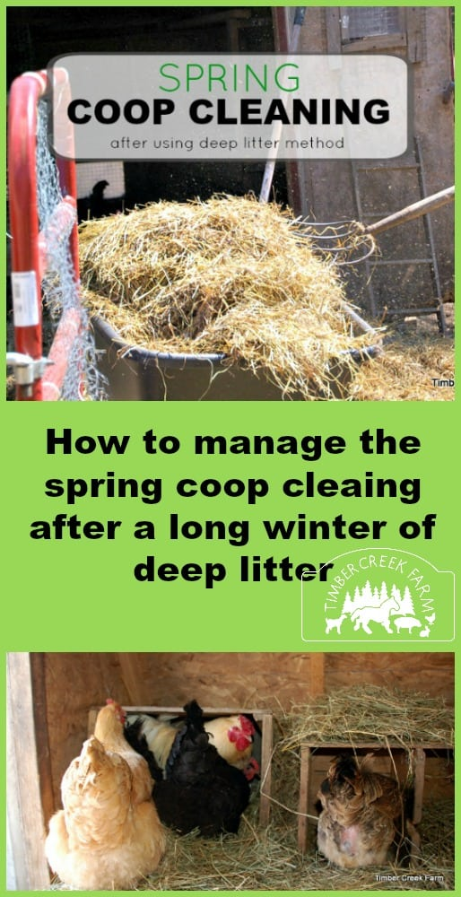 Spring Coop Cleaning With Deep Litter Timber Creek Farm