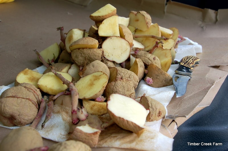 Potato Tower – Does it Grow More Spuds? - Timber Creek Farm