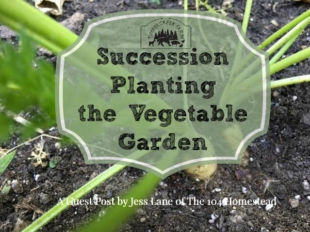 Succession Planting – A Garden Plan from The 104 Homestead