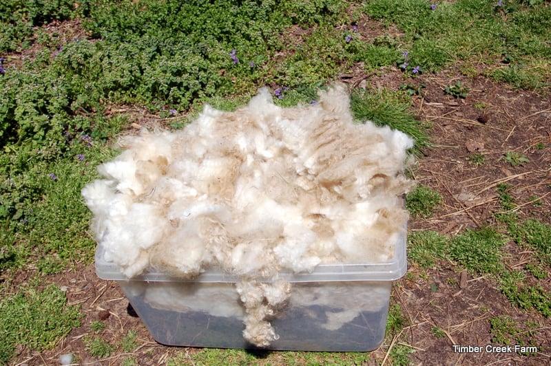 DSC_0334 dying wool