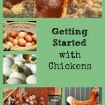 Better Hens and Gardens Image