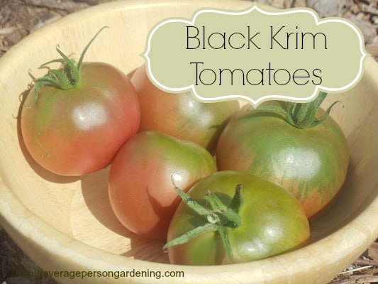 Grow Black Krim Heirloom Tomatoes