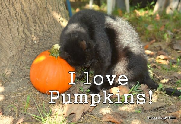 Use the whole pumpkin