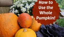How to Use the Whole Pumpkin timbercreekfarmer.com