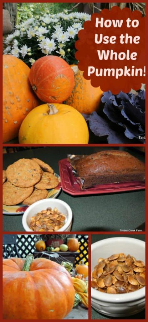 use whole pumpkin - Do you try to use the whole pumpkin when you cook? Pumpkins are simply amazing, as a decoration and in taste, and nutritionally. A great vegetable all wrapped up in a very cute package