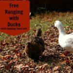 Free Range Ducks Pros and Cons